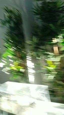 Image ericafontesx  [10-06-2020] Webcam